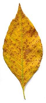 Yellow leaves - autumn.jpg