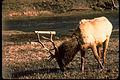 Yellowstone National Park YELL4573.jpg