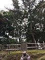 Yougou No Matsu Nara Koen.jpg