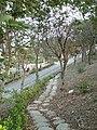 Yuanli Shanjiau Park -2.jpg