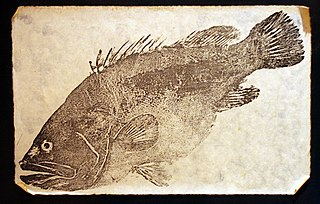 method of Japanese fish printing