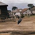 Zaire (voorheen Belgisch Congo ) kamp voor Angolese vluchtelingen in Zaire, Bestanddeelnr 254-9421.jpg
