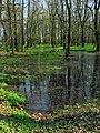 Zielona-Pogoria 11.04 26.jpg