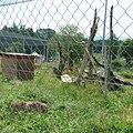Zoo Tábor-Větrovy, puma 02.jpg
