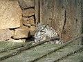 Zoo des 3 vallées - Chouette - 2015-01-02 - i3312.jpg
