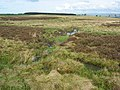 (Part of) Catton Moss - geograph.org.uk - 416575.jpg