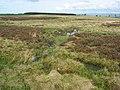(Part of) Catton Moss - geograph.org.uk - 416575.jpg