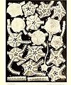 Échinodermes (astéries, ophiures et échinides) (1917) (20615777541).jpg