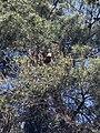 Φωλιά σε δέντρο.jpg