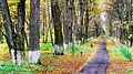 Боровск ВНИИФБиП Парк 2.jpg