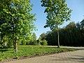 Графський парк (парк Ніжинського педінституту), Ніжинський район, м. Ніжин 74-104-5004 16.JPG