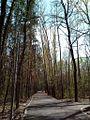 Дорожка в Непейцевском парке.jpg