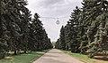 Еловая аллея в Быхановом саду.jpg