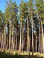 Кремінські каптажі, лісова частина.jpg