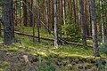 Лесной массив у села Теребень 3.jpg