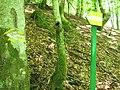 Маркована стежка до водоспаду Лихий.jpg