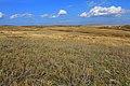 Местность в окрестностях села Шкуновки - panoramio.jpg