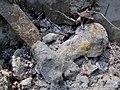 Міна викопана мисливцями за металом в заказнику Полігон.jpg