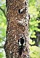 Непран Вячеслав, заказник «Сафоново», 44-216-5008, Кремінський район, ділянка чорно вільхового лісу з рідкісними фітоценозами (3).jpg