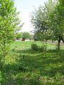 Огород (Зеленная весна) - panoramio.jpg