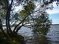 Озеро Шарташ - panoramio (13).jpg