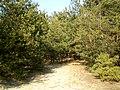 Паўднёвы ўваход у лес - panoramio.jpg