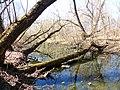 Правобережная старица реки Яузы с фрагментом низкой поймы 03.jpg