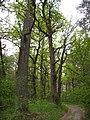 Чернечий ліс 46.jpg