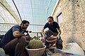 عکس از نحوه تعویض گلدان و خاک کاکتوس در گلخانه - مکان گلخانه دنیای خار در روستای مبارک آباد قم 04.jpg