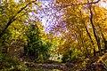 پاییزدر ایران-قاهان قم-Autumn in iran-qom 07.jpg