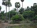 நீர்நிலையும் கொக்கும் 2.JPG