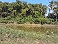 หมู่บ้าน นาพิพาน ต.ปะโค เมือง หนองคาย - panoramio (14).jpg