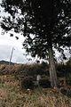 カッパの碑 - panoramio.jpg