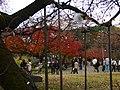小石川植物園(2009.11.28撮影) - panoramio (7).jpg