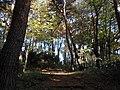 真美沢公園 Mamisawa Park - panoramio.jpg