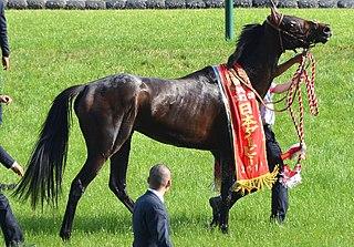 Duramente Japanese-bred Thoroughbred racehorse