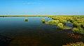若尔盖花湖-错热洼坚Cuorewajian Lake - panoramio (4).jpg