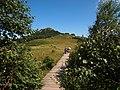 草甸栈道 - Boardwalk on Meadows - 2012.08 - panoramio.jpg