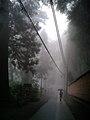 高尾山 霧の薬王院参道 - panoramio.jpg