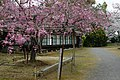 鹿島城跡 旭ヶ岡公園 - panoramio.jpg