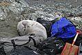 0046 Tiere der Antarktis.jpg