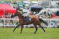 013e Epsom Derby Day 2015 - Investec Woodcote Stakes - Be Bop Tango and Ben Curtis going to post (18585034072).jpg