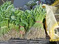 0251jfPanoramics Pulilan Fields Plants Philippinesfvf 27.JPG