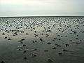 03-07-dagebuell-by-RalfR-150.jpg