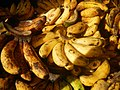 0495Common houseflies eating bananas in the Philippines 28.jpg