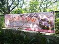 05704jfMidyear Orchid Plants Shows Quezon Cityfvf 45.JPG