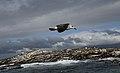 0941 Seal Island JF.jpg
