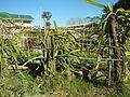 09556jfAlexis G. Santos National High School Liciada, Bustos Bulacanfvf 28.jpg
