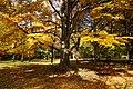 131103 Hokkaido University Botanical Gardens Sapporo Hokkaido Japan13bs.jpg