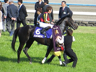 Fenomeno (horse) Japanese-bred Thoroughbred racehorse